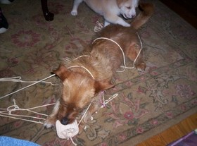 Knitting_dogs