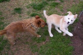 Pups_1