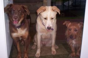 Pups_2